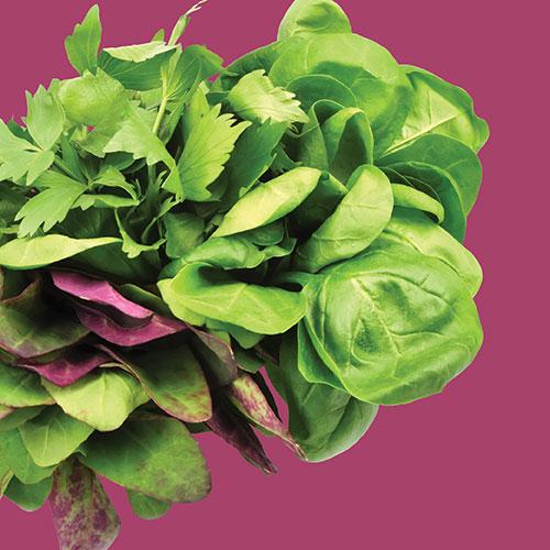 Lettuce Spicy Salad Mesclun