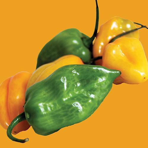 Pepper Chilli Habanero Mixed Colours