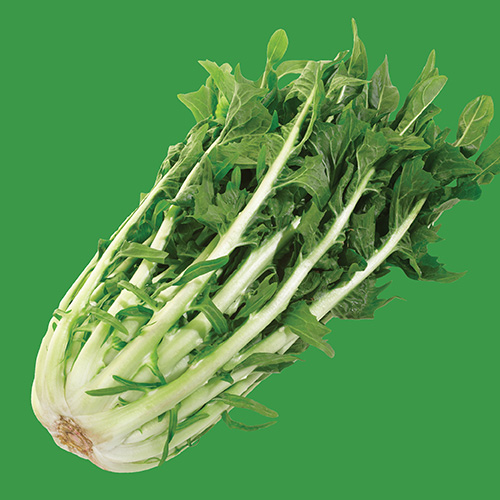 RAW Endive Chicory Catalogna Bi-colour Blend