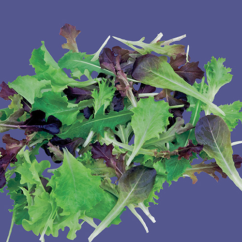 RAW Lettuce Mini Greens