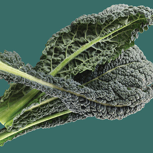 Kale Vates Blue Curled